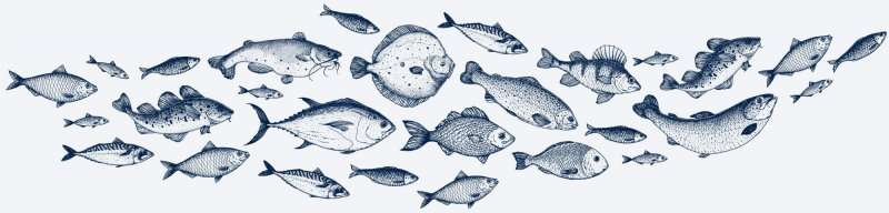 Selection Of Fish Illustration