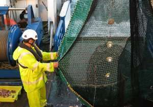 Pisces On Net Being Hauled
