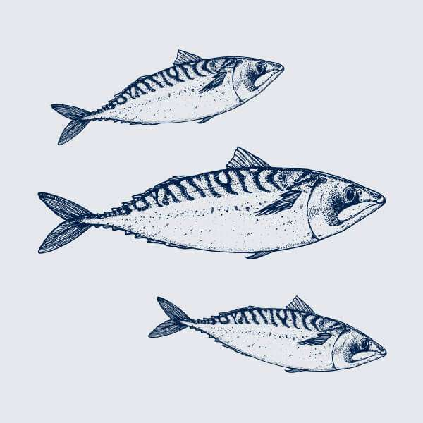 Seasonal catch illustration